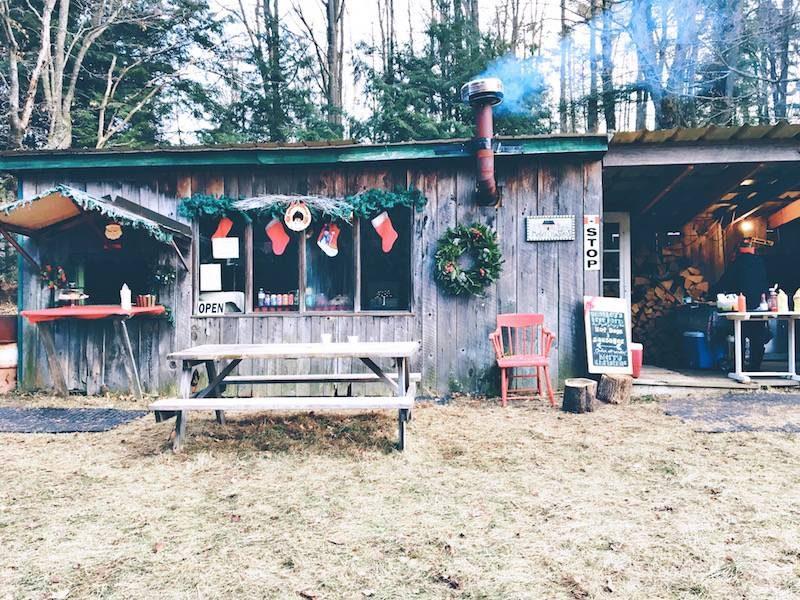 paid-to-shop-christmas-tree-farm